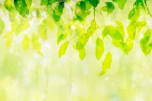 新緑 きらめき