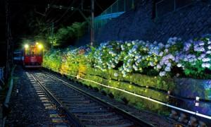 箱根あじさい電車 ライトアップ