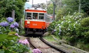 箱根 電車 あじさい