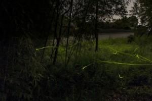 ホタル 林 光