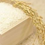 米の中の虫対策と駆除方法。どこから入る?お米は食べられる?