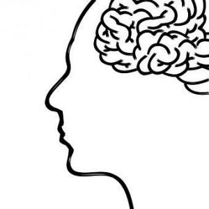 人間 脳 イラスト