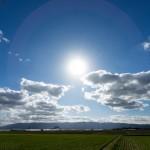夏 太陽 自然