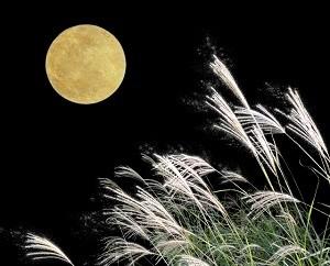 月 ススキ