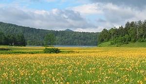 大自然 黄色い花