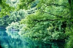新緑ときれいな池