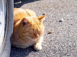 日向ぼっこ 猫