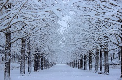雪で覆われた街路樹