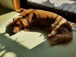 犬 日向ぼっこ