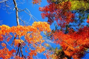 青空と色とりどりの紅葉