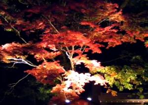 長瀞 紅葉 宝登山神社 ライトアップ