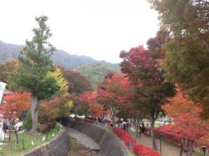 河口湖 もみじ回廊の紅葉