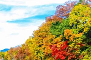 長瀞 色とりどりの鮮やかな紅葉