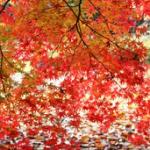 新宿御苑の紅葉2017の見頃、混雑状況。ライトアップはある?