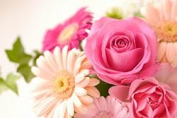 薔薇 ガーベラ