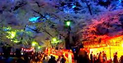 大宮公園 ライトアップ