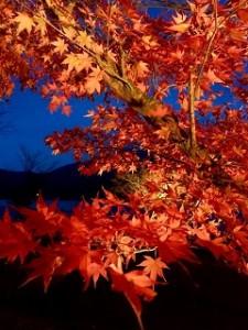 紅葉 ライトアップ 河口湖