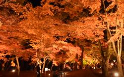 月の石もみじ公園 ライトアップ