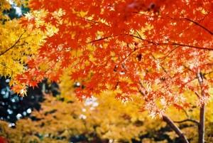 秋 紅葉と黄葉