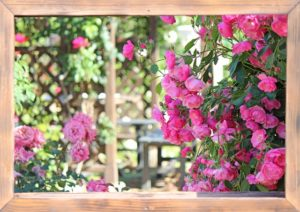 バラ ガーデン