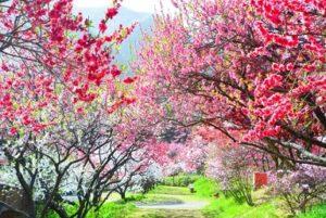 花桃 トンネル