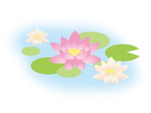 水面の蓮の花 イラスト
