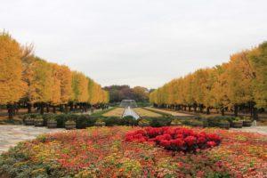 昭和記念公園 黄葉 花