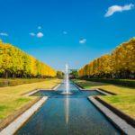 昭和記念公園の黄葉紅葉まつり2019の日程!イベントやライトアップは?