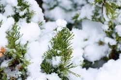 大寒の候 雪