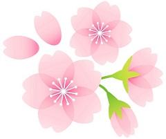 桜の花 イラスト