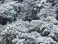 冬 雪景色