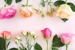 白いボードに飾られた花