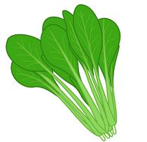 小松菜 緑黄色野菜