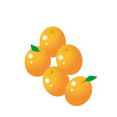 金柑 柑橘系