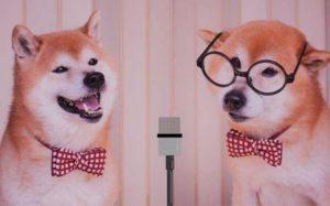 漫才する犬のコンビ