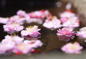 水面 梅の花