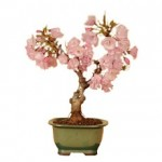 桜盆栽のお手入れ方法。剪定の仕方や植替えの時期は?水やりや肥料は?