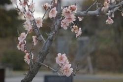 立春 季節