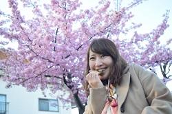 桜 食べる