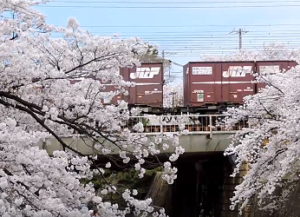 桜 夙川公園 貨物列車