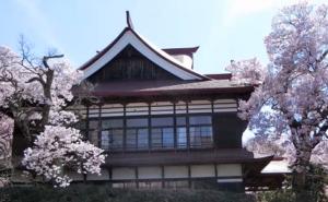 高遠城址公園 高遠閣 桜