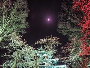 高田公園 城 桜 ライトアップ 月