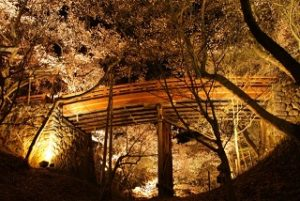 高遠城址公園 桜雲橋 桜 ライトアップ
