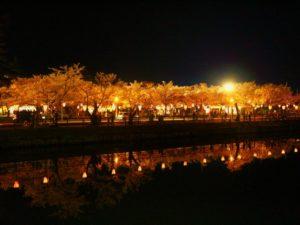 高田公園 桜 ライトアップ 堀