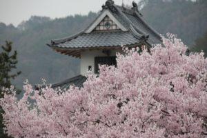 高遠城址公園 桜と天守閣