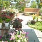 ガーデニング初心者におすすめの花の種類。花壇やプランターにも