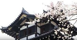 高田城 三重櫓 桜