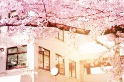 桜と陽の当たる校舎