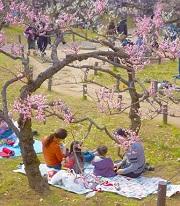 大倉山公園梅林観梅会 家族
