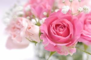 バラ 花 ピンク